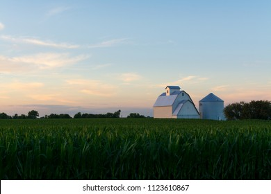 Sunset with cornfield and white barn in background.  LaSalle County, Illinois, USA