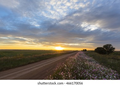 Sunset and cosmos flowers next to the road