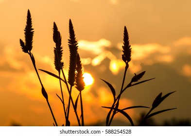 sunset at the countryside in Thailand