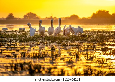 Sunset in Danube Delta with Pelicans preparing to sleep