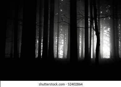 sunset in the dark forest
