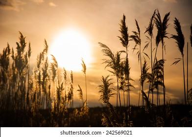 Sunset with dark plants