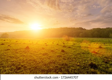 Sunset or dawn in a field with green grass, footpath and willows in the background. Early summer or spring. Landscape after rain with a light haze.