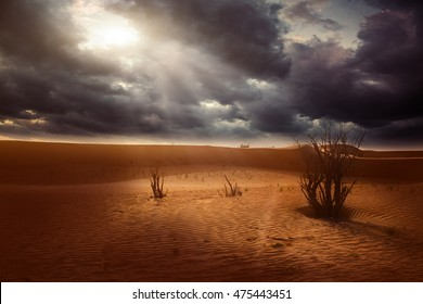 Sunset in the desert sand dunes background