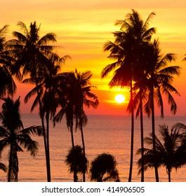Sunset Divine Palm Paradise