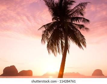 Sunset Divine Tree Silhouettes