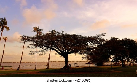 sunset down ocean tree abidjan africa ivory coast