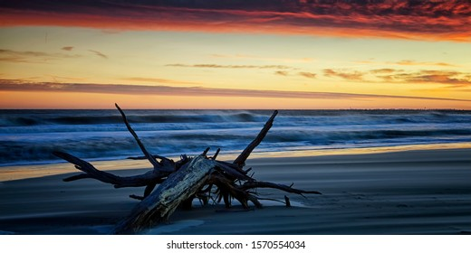 Sunset and driftwood on Hilton Head Island, SC.