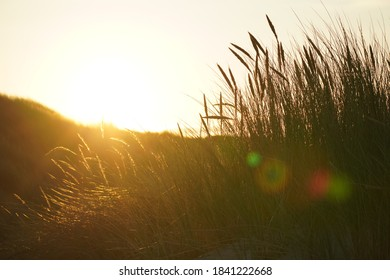 Sunset in the Dunes of Juist. High quality photo