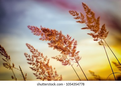 Sunset - dusk in grass meadow, beautiful high grass and grass seed