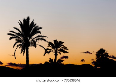 Sunset in Elche with palm trees in the foreground. Horizontal shot