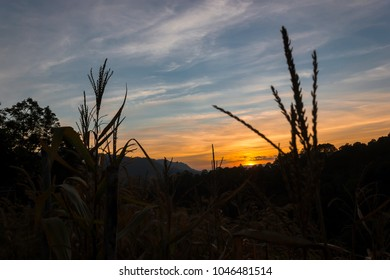 Sunset in the evening time. Silhouette tree and grass on the sunset and blue sky background.