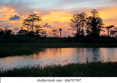 sunset in the everglades shows cypress trees and bayou