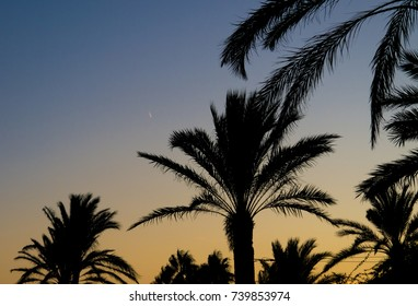 The sunset falls behind the palms in Spain.