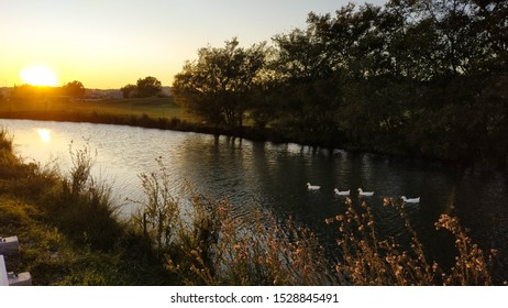 Sunset and a family of ducks at the mouth of river Zrnovnica, Croatia