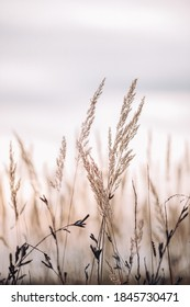 Sunset in the field. Close view of grass stems against dusty sky. Calm and natural background