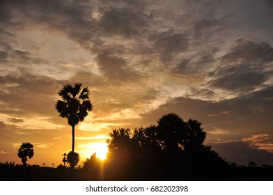 Sunset in the field and golden sky. field and sugar palm Middle of the field