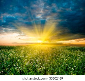 sunset in the field with white flowers