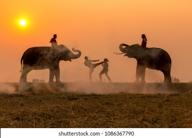 Sunset fighter tradition Thai boxing or Muay-Thai outdoor battle with mahout and elephants, Ancient fighter on the world sport of Thai and around.