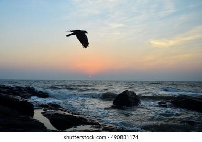 sunset flight bird flying over the ocean