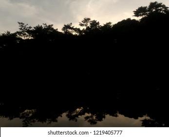 Sunset in florest