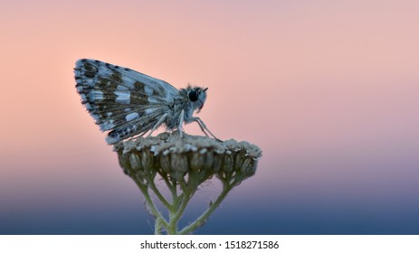 Sunset and flower butterfly photos