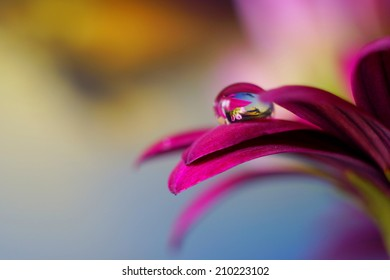 Sunset and flowers within the Water drop which is itself on a pink flower petal.