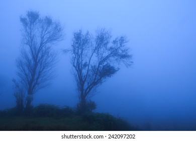 Sunset of fog and trees in winter season