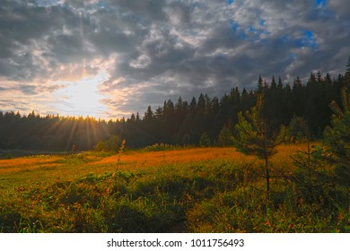 Sunset at the forest edge