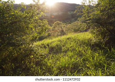 Sunset in the forest in Great Zimbabwe, the south of Africa, nature, sunny day, trees, bushes, grass. Sunset in historical place, no body.