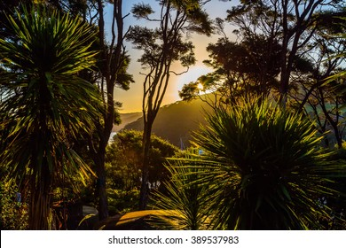 Sunset in forest of Port Fitzroy, Great Barrier Island, New Zealand