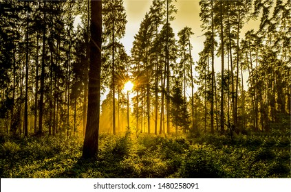 Sunset forest trees silhouettes view. Sunset forest sunbeam. Sunset forest sunbeams. Forrest sunset sunbeam view