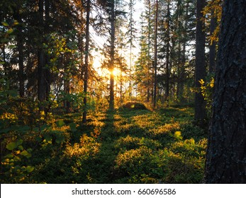 Sunset and a forest view in Suomussalmi, Finland.