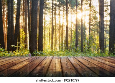 sunset forest and wooden floor