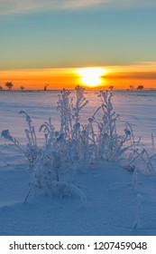 Sunset with frosty plants and snow in the landscape