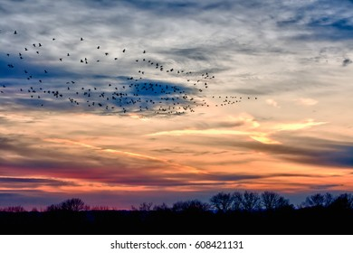 Sunset with geese flying over Chester County, Pennsylvania