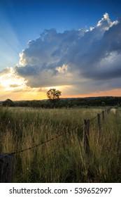 Sunset in Girraween