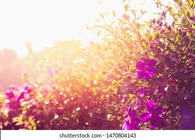 Sunset gleam over wild purple flowers