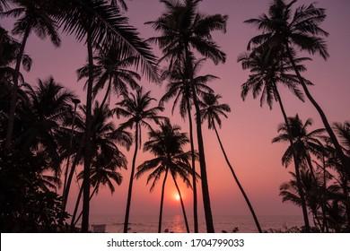 SUNSET IN GOA, january 2020