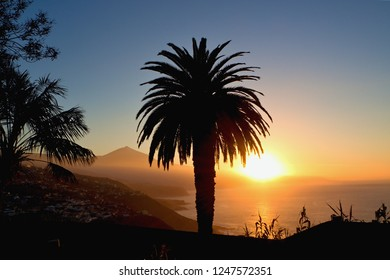"""sunset in gold on the north coast on tenerife. backlit shot, in the foreground a large palm ind black, behind the view of the """"Teide"""" in gold and part of the coast."""