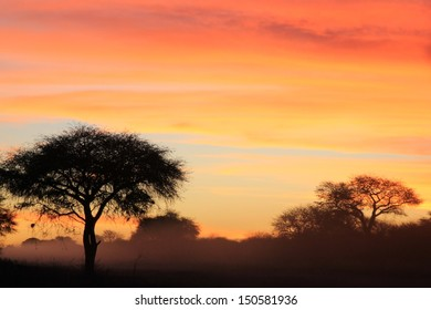 Sunset of Golden and Red Colors - Scenery from Wild Africa - Silhouette of Color and Background Beauty