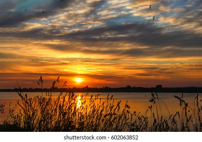 Sunset grass on river sunset landscape