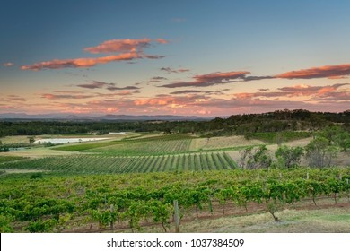 Sunset at the Hunter Valley vineyards, NSW, Australia