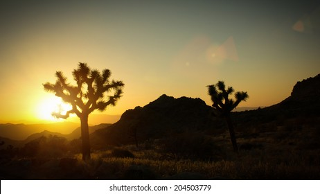 sunset in the joshua tree national park