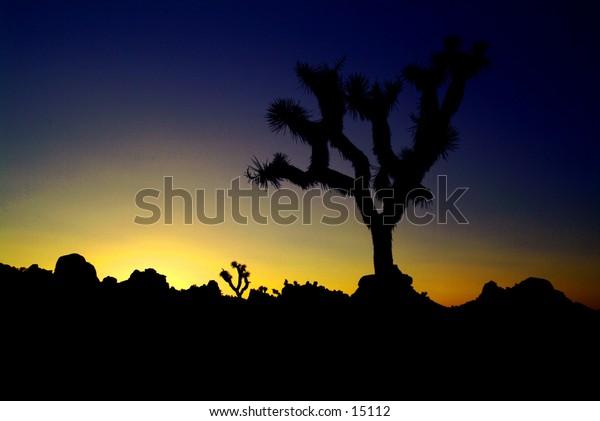 Sunset at Joshua Tree Natl' Park