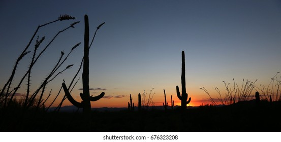 The sunset just outside of Tuscon, Arizona showcasing silhouettes of saguro cacti and other vegetation.