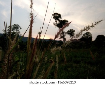 Sunset in Kao Yai national park,In the evening is the most pleasant time.In the picture there is also a groundwater storage tank , Nakhon Ratchasima, Thailand.