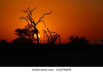 Sunset at Kruger park South Africa is one of the largest game reserves in Africa.