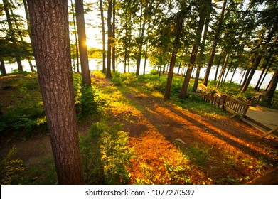 Sunset at the lake. Sun rays filtering thru the trees