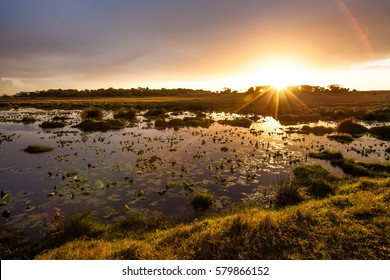 Sunset in the lake with water lilies, iSimangaliso Wetland Park, KwaZulu Natal, South Africa.
